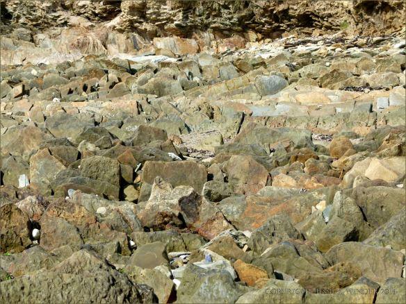 Silurian rocks on the beach in Ireland