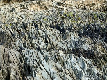 Texture, colour, and pattern in Silurian rock strata on the beach at Ferriters Cove