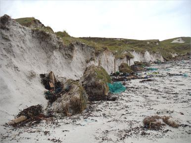 Eroding sand dunes of tombola with large clods of turf and fence posts on the beach