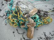Broken wooden posts tangled with rope at the base of dunes in Dogs Bay