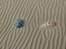 Low tide sand ripple beach pattern