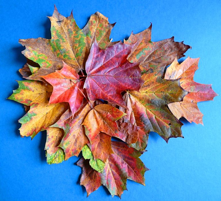 An arrangement of autumn leaves on a blue background