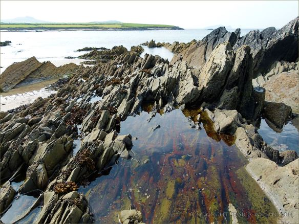 Rock pool with encrusting algae