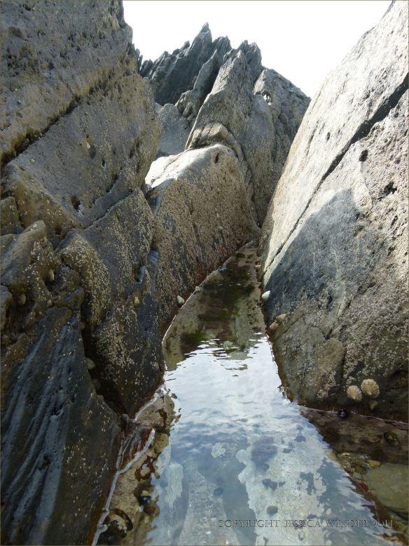Rock pool with encrusting algae