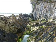 Silurian rocks at the north end of Ferriters Cove