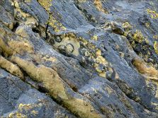 Silurian rocks with fossils at the north end of Ferriters Cove