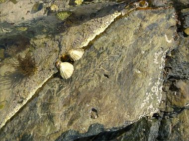 Could this be a Silurian plant fossil?
