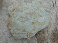 Fossils in Silurian rock at Ferriters Cove