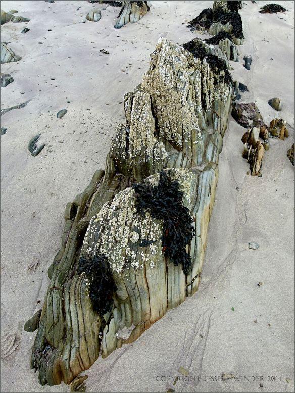Silurian rocks on the beach at Ferriters Cove