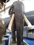 Specimen of elephant taxidermy