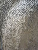 Pattern and texture in elephant skin