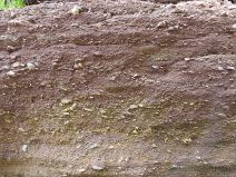 Detail of layering and texture in conglomerate from the Lower Carboniferous Hopewell Cape Formation