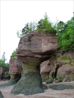 "Sea stack or ""flower pot"" at Hopewell Rocks in New Brunswick."