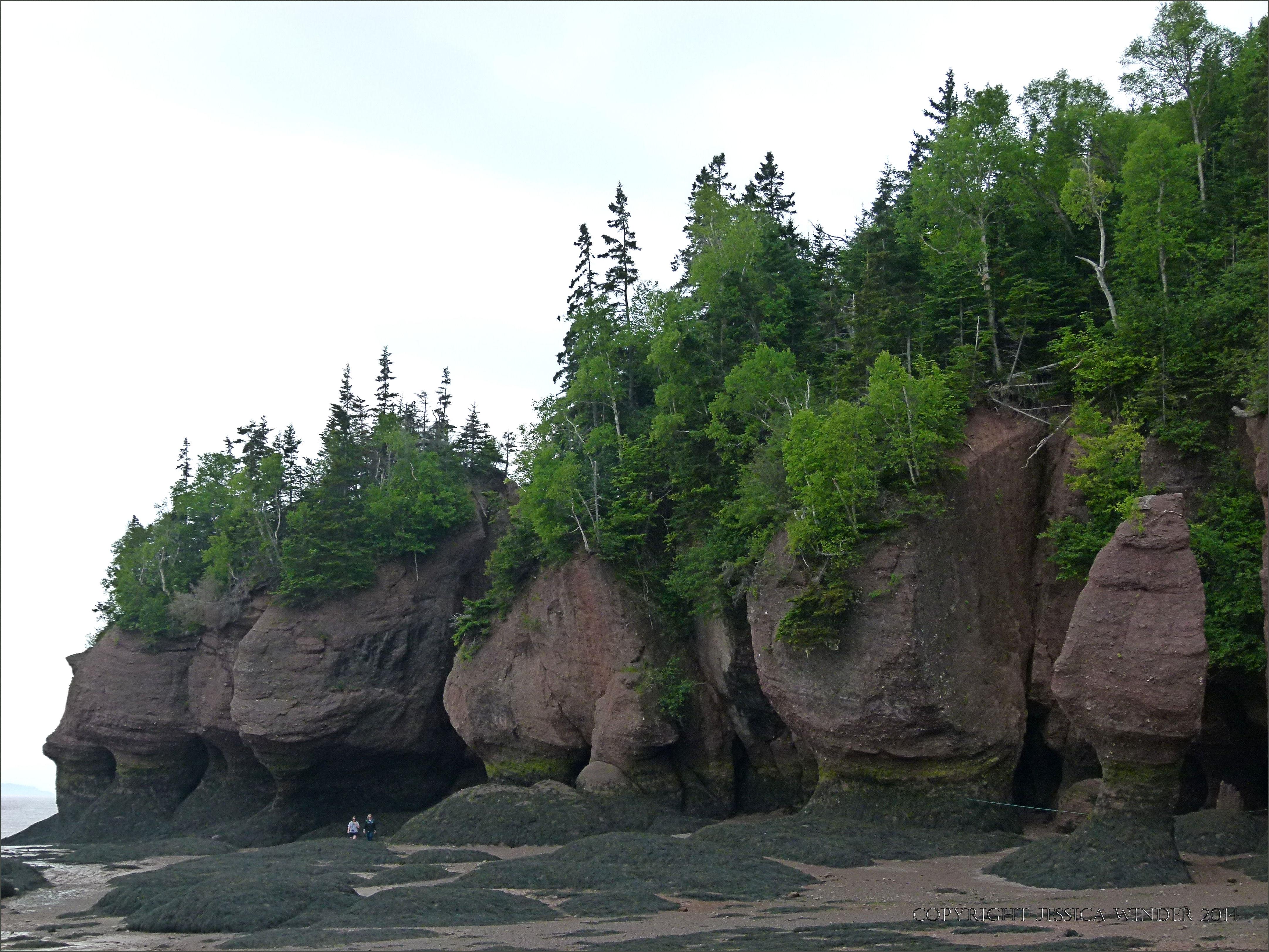 Hopewell Rocks New Brunswick Jessica S Nature Blog