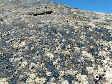 Possible granite batholith rock covered with barnacles and black biofilm at Port Douglas in Queensland.