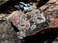 Weathered rock with lichen on an outcrop at Four Mile Beach in Port Douglas