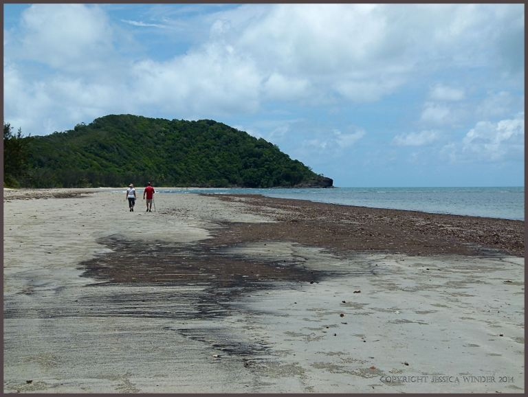 General view of Cape tribulation beach with driftline of fine particle plant debris