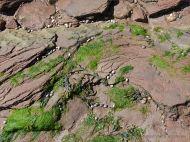 Water-worn Triassic bedrock flat on Waterside Beach in New Brunswick