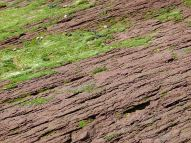 Red Triassic rock layers on the shore at Waterside Beach in New Brunswick.