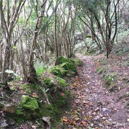 Footpath through the wooded valley sides down to Pwll Du Bay