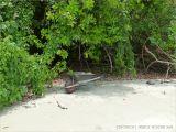 Wheel barrow of coconuts at Cape Tribulation Beach