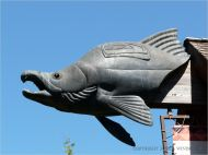 Bronze sculpture of a salmon on a museum on the campus of the university in Eugene, Oregon.