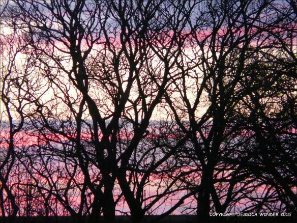 January sunrise colours seen through a tracery of bare winter branches
