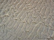 Texture and pattern in wet sand ripples at Rhossili in Gower