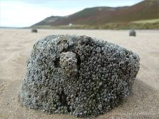 Stumps of a wooden posts belonging to an unidentified structure on Rhossili beach