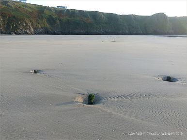 Stumps of wooden posts belonging to an unidentified structure on Rhossili beach