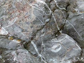 Detail of Carboniferous Limestone at Pwll Du Bay