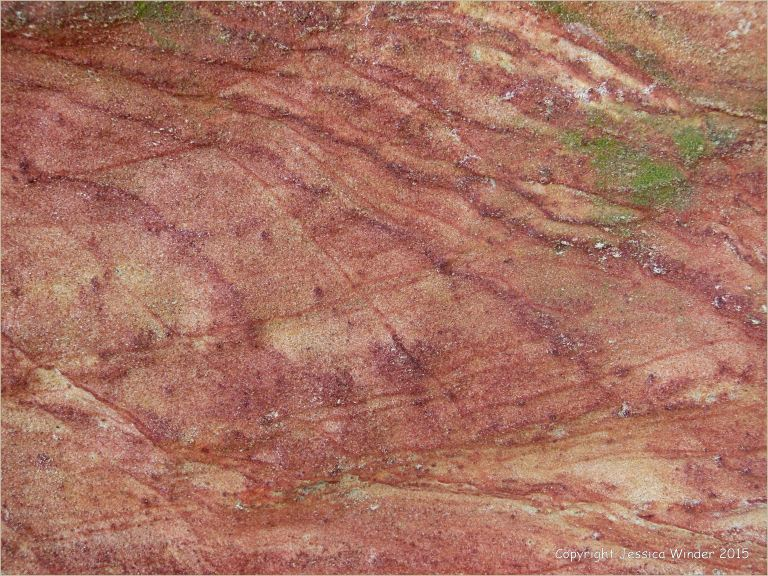Rock colour, pattern, and texture in Creekmoor Sand (Redend Sandstone) at Studland Bay