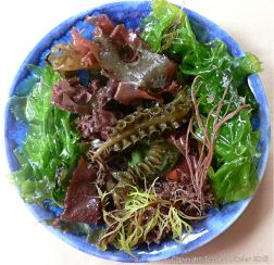 Colourful common British seaweeds in a blue bowl