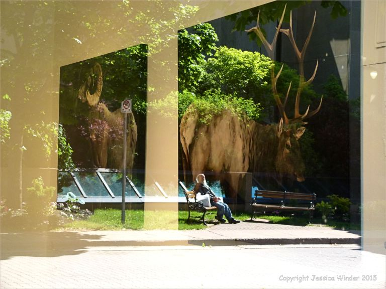 Trompe l'oeil of gigantic wild beasts grazing behind an old man on a park bench