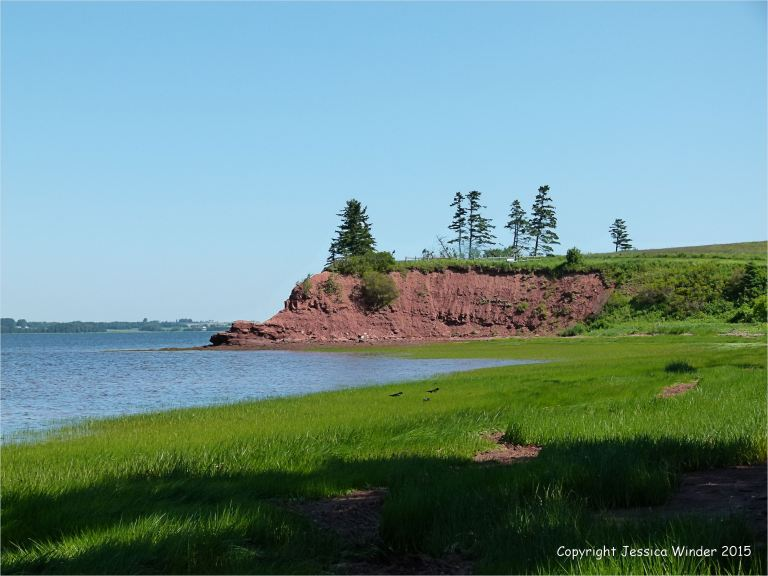 View along the shoreline at Lord Selkirk Provincial Park in Prince Edward Island, Canada, with lush green early summer vegetation and red Permian rocks.