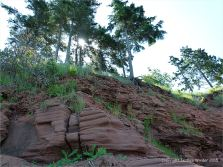 Pine tree-topped low red cliffs at Lord Selkirk Provincial Park, PEI