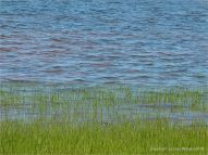 Red Permian coastal muds showing through shallow water along the shore at Lord Selkirk Provincial Park, PEI