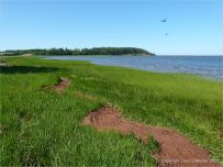 Red tide-line along the grassy shore at Lord Selkirk Provincicial Park on Prince Edward Island in Atlantic Canada.