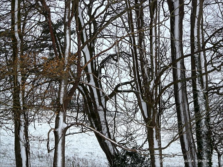 Trees with snow in the Dorset countryside