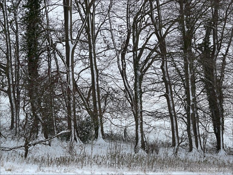 Winter landscape with trees and snow in the Dorset countryside