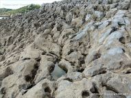 View of the raised palaeo-karst limestone surface at Caswell Bay