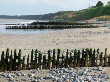 Rows of timber posts form beach groynes at Rosslare Strand in Ireland.