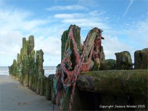 Worn wooden posts of a beach groyne with trapped fishing ropes