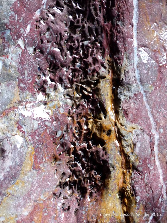 Natural abstract image of a crack in the rock of a cliff face with surface texture showing worm burrows
