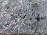 Limestone rock texture on the Gower coast