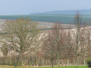 A Dorset landscape in March