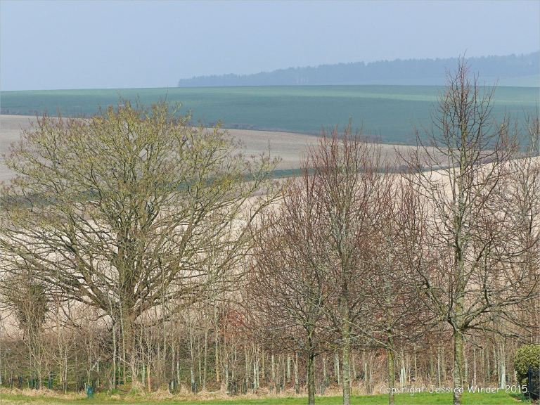 A Dorset landscape in March