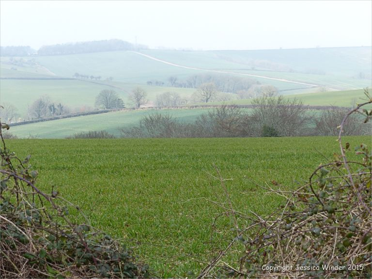 A view fro the top of Charlton Down in Dorset.