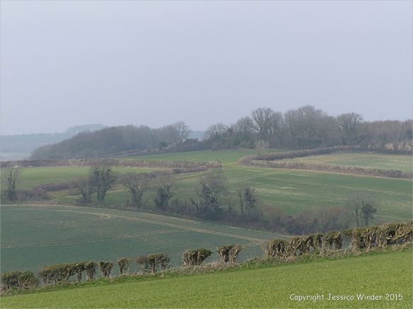 Agricultural countryside around Charlton Down in Dorset, England.