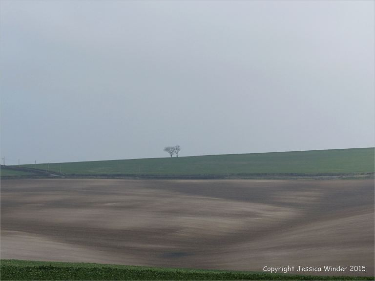 View of ploughed chalk field on the hill at Charlton Down